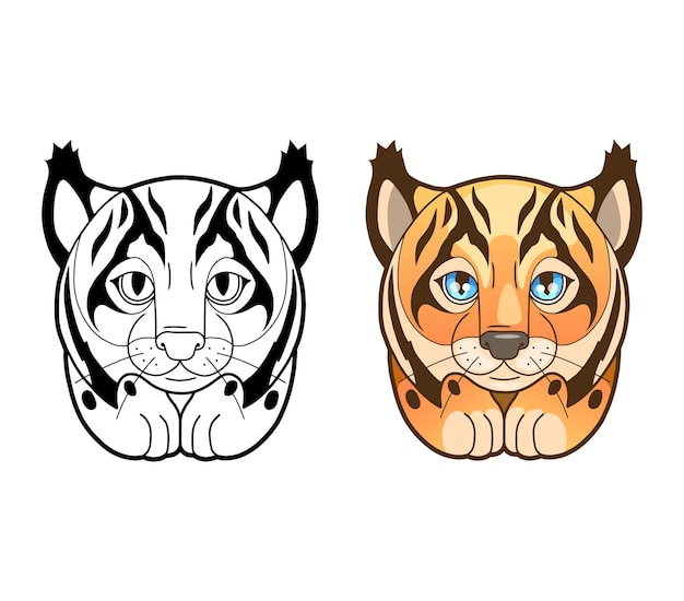 Schattige lynx