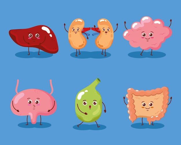 Schattige organen mensen karakter