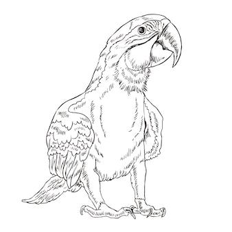 Schattige papegaai kleurplaat in prachtige stijl
