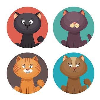 Schattige set kittens dierenwinkel