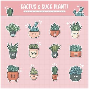 Schattige verzameling cactussen en succulenten