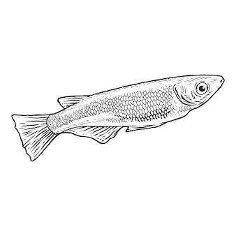 Schattige vissen tekening