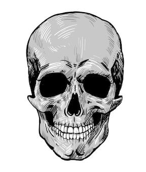 Schedel vector hand getrokken ontwerp grijze realistische schedel geïsoleerd op een witte achtergrond vector
