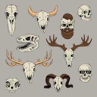 Schedels uitgebeend hoofd van dieren van stiergeit of schapen en menselijke schedel met baard voor kapperskeletset