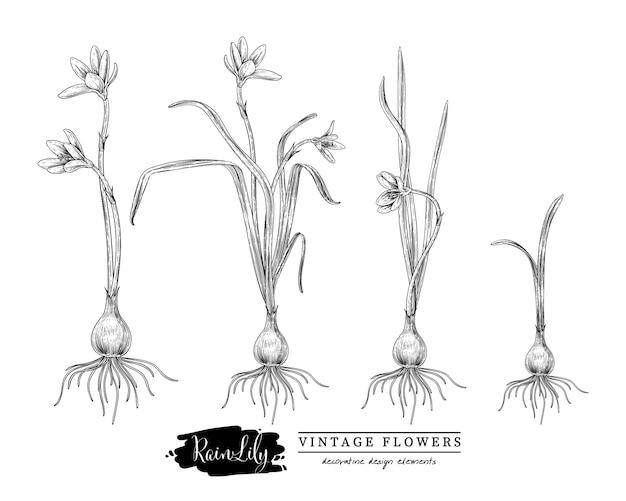 Schets bloemen kruiden set