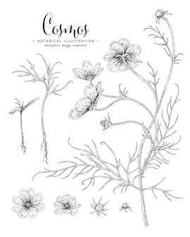 Schets bloemen plantkunde collectie