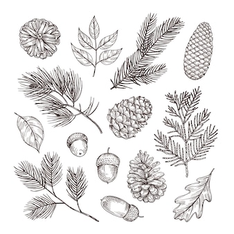 Schets fir takken. eikels en dennenappels. kerst winter en herfst bos elementen. hand getekend vintage geïsoleerde set