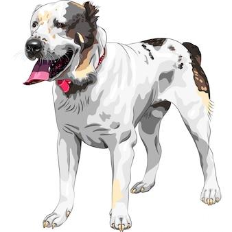 Schets hondenras centraal-aziatische herdershond
