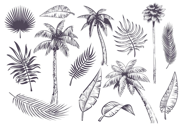 Schets palmbomen en bladeren, handgetekende tropische palmen en blad, zwarte silhouet exotische planten silhouette