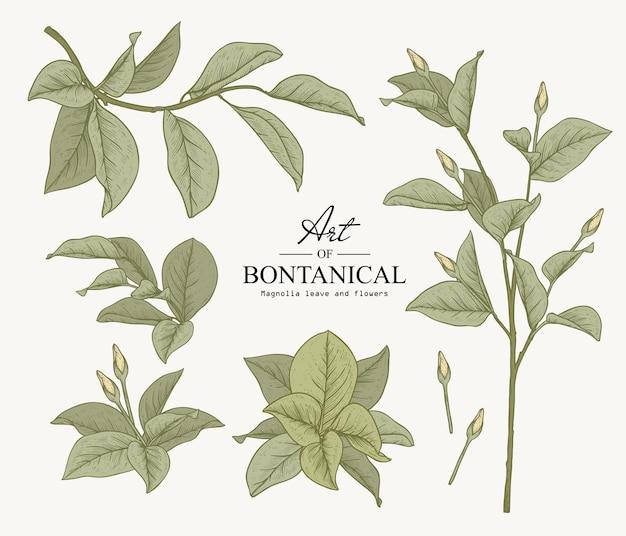 Schets plantkunde ingesteld. magnolia blad- en bloemtekeningen. prachtige lijntekeningen. illustraties.