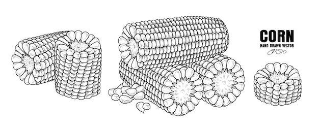 Schets rijpe maïs decoratieve set hand getrokken botanische elementen
