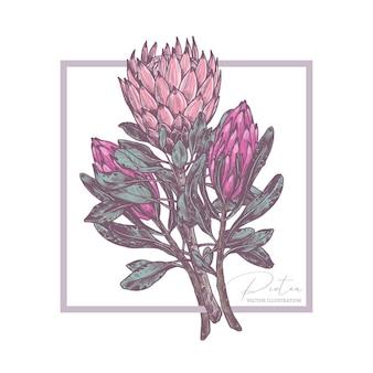Schets tekening boeket van tropische exotische bloemen protea illustratie
