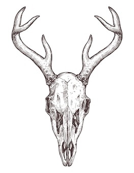 Schets van herten schedel geïsoleerd op wit