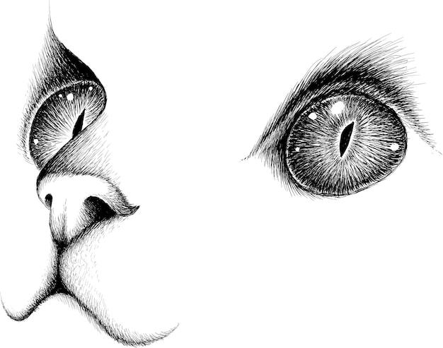 Schets van kat gezicht