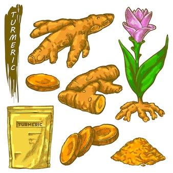 Schets van kurkuma wortel vector curcuma spice