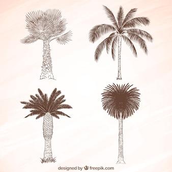 Schets van palmbomen