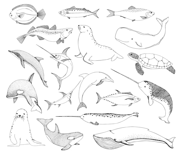 Schets verschillende zeedieren. schildpadwalvis, walrus, dolfijn en anderen.