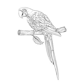 Schets zwart-wit vintage exotische tropische vogel papegaai ara. illustratie