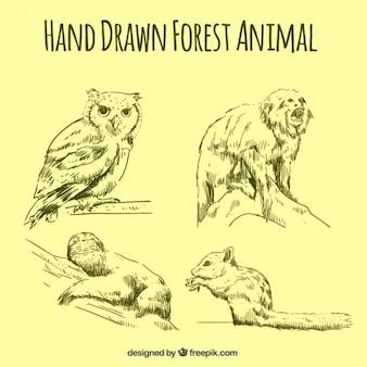 Schetsen set van dieren in het bos