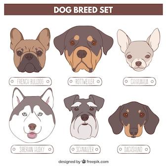 Schetsen verscheidenheid van honden