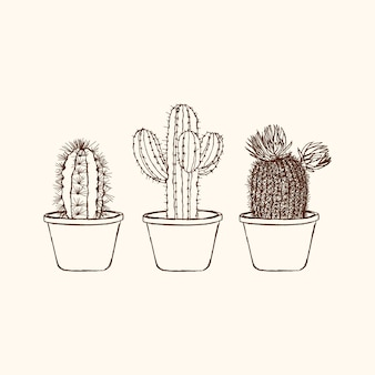 Schetsmatig cactus instellen