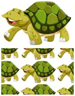 Schildpad op wit wordt geïsoleerd