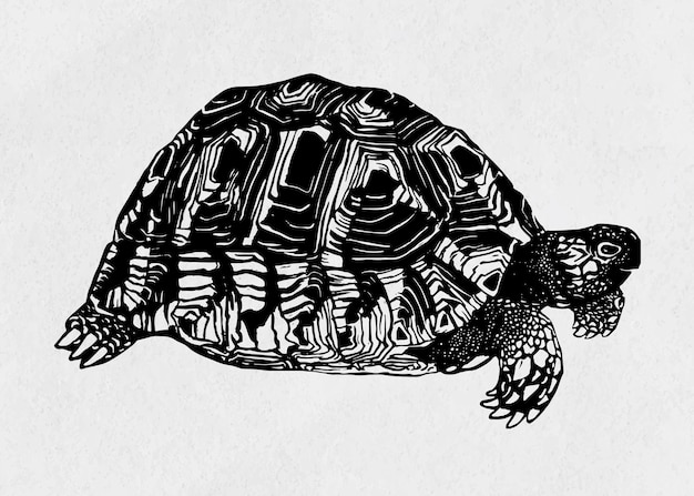 Schildpad zwarte linosnede vintage tekening