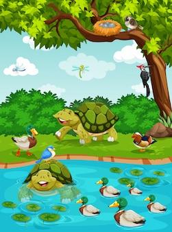 Schildpadden en eenden bij de rivier