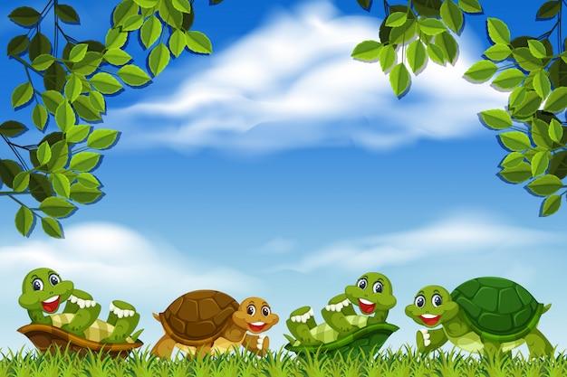 Schildpadden in parkscène