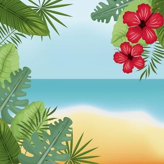 Schoonheid strand hibiscus palm eiland