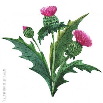Schotse wilde planten boutonniere, distel boeket
