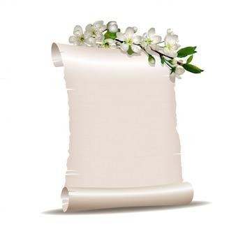 Scroll blanco papier met bloeiende kersen tak