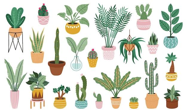 Selectie van planten in potten