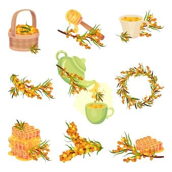 Set afbeeldingen van duindoorn, thee en honing ervan. illustratie op witte achtergrond.