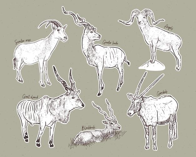 Set antilopen, hand getrokken schets van dieren