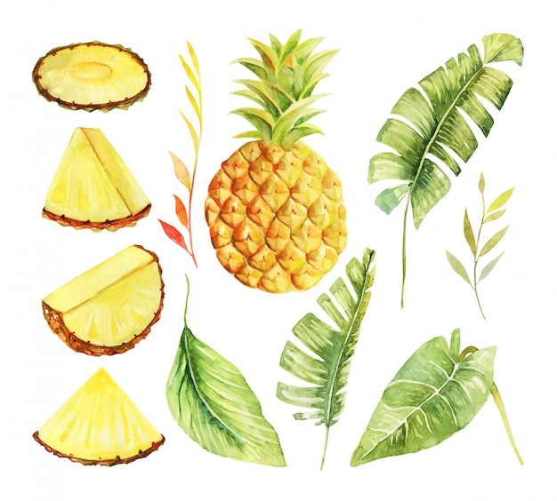 Set aquarel hele ananas en gesneden, en tropische groene planten en bladeren, handgeschilderde geïsoleerde illustratie