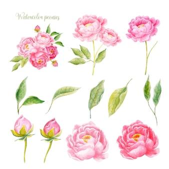 Set aquarel pioenrozen hand getrokken bloem