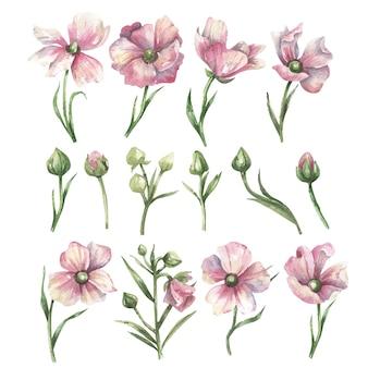 Set aquarel roze bloemen, groene bladeren en toppen