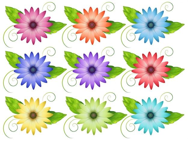 Set bloemen