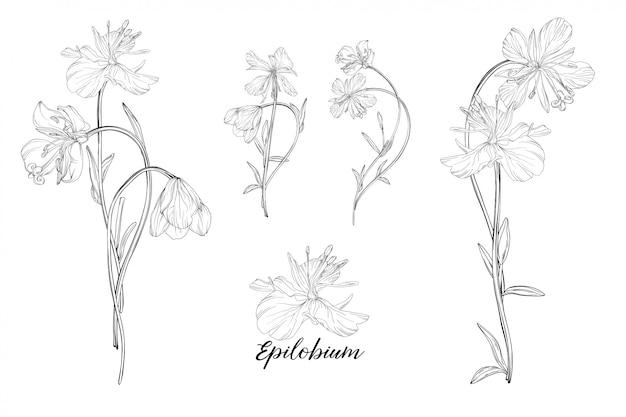 Set bloemenelementen epilobium