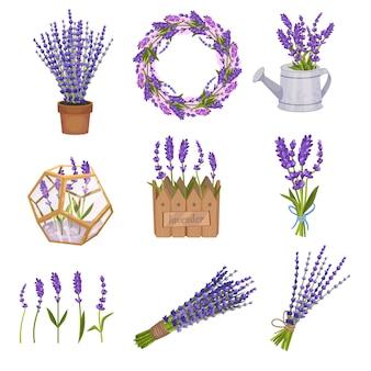 Set boeketten en kransen van lavendel