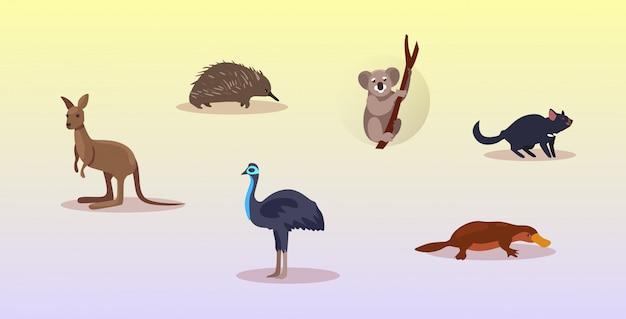 Set cartoon bedreigde wilde australische dieren tasmaanse duivel echidna struisvogel vogelbekdier koala kangoeroe symbolen collectie dieren in het wild soorten fauna concept plat horizontaal