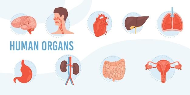 Set cartoon platte interne organen en systeembrein