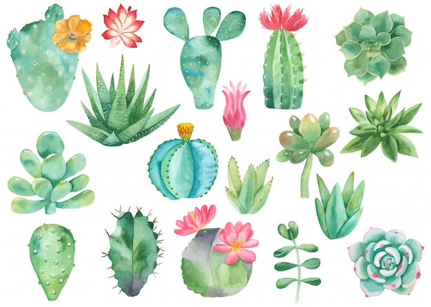 Set clipart van cactussen