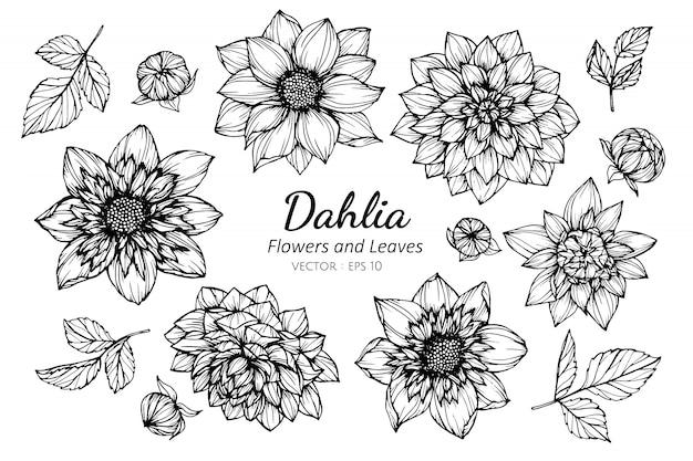 Set dahlia bloem en bladeren tekening illustratie.