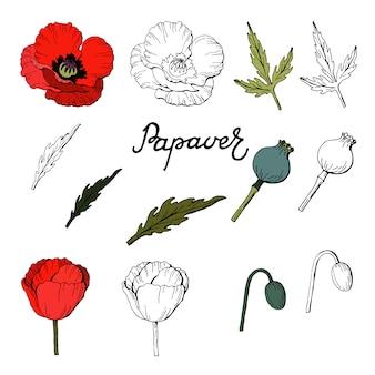 Set elementen van papavers