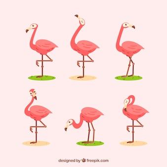 Set flamingo's met verschillende houdingen