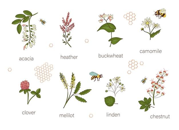 Set gekleurde wilde bloemen. n van acacia, heide, kamille