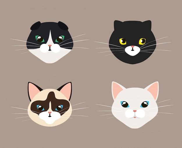 Set gezichten van schattige katten