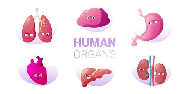 Set grappige anatomische mascotte nieren longen hersenen maag hart lever tekens schattig menselijk lichaam interne organen collectie horizontaal